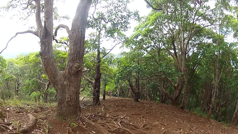 Hawaii - Manana Falls Video-1.MP4