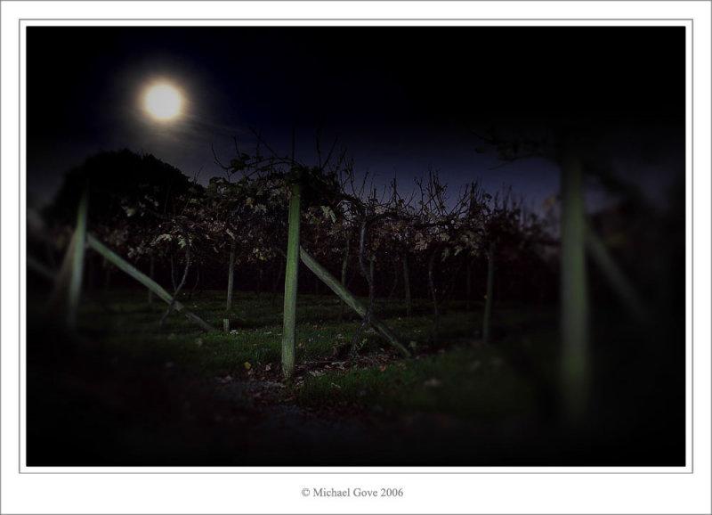 Aust vine yard at night (69653806).jpg