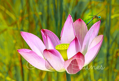 Flowers/Nature