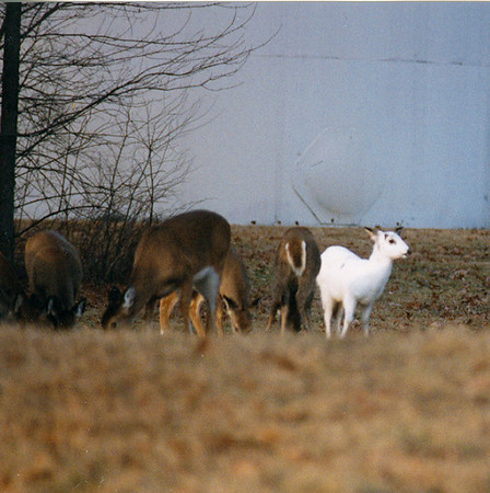 Carter Wallace deer pictures