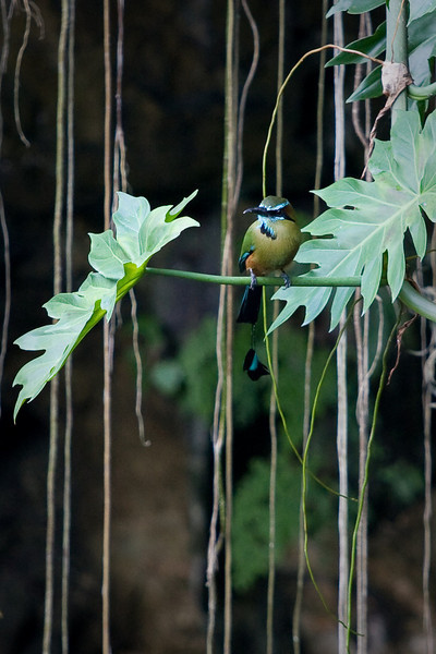 What's up, motmot?