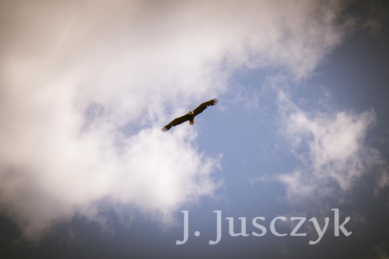 Jusczyk2021-6833.jpg