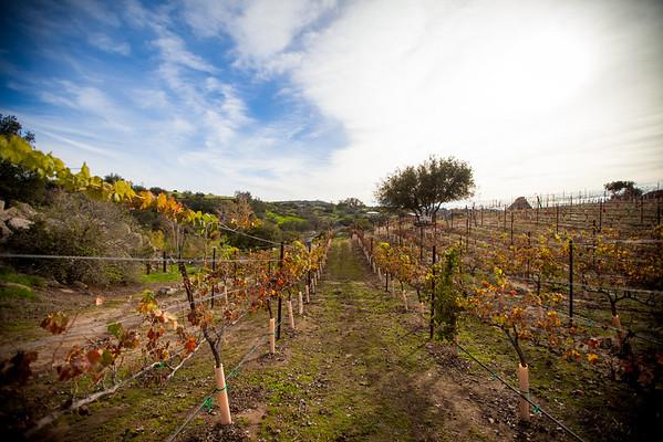 Hatfield Creek Winery