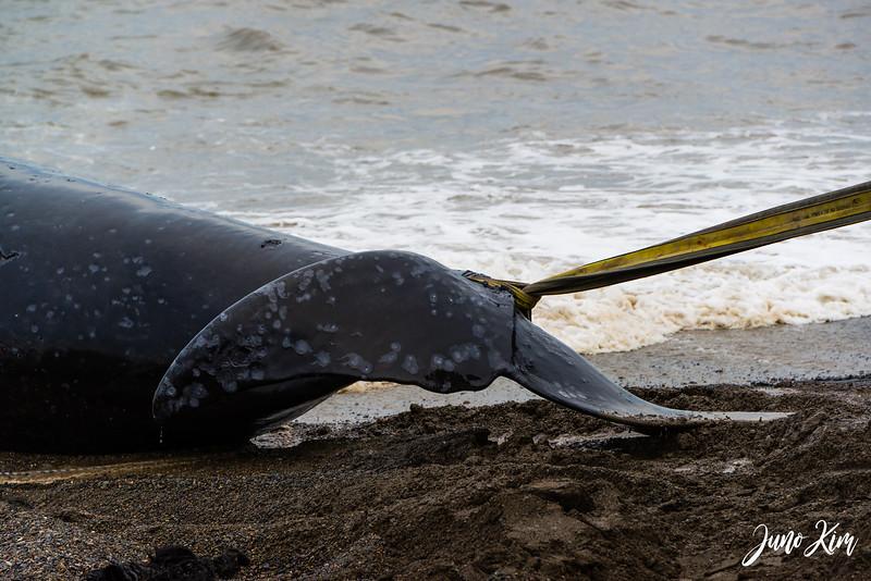 Utqiagvik Whaling-6104379-Juno Kim.jpg