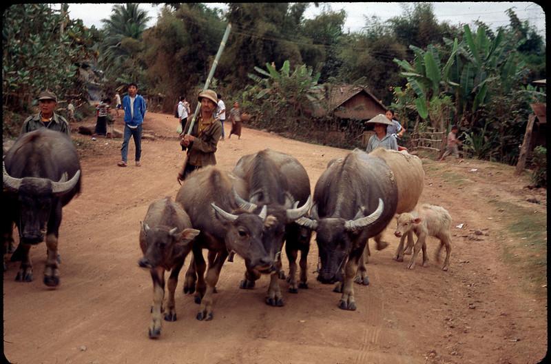 Laos1_135.jpg