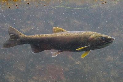 QAE Salmon Field Trip