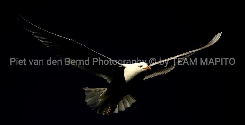Piet van den Bemd - Freelance Wildlife Ecology Manager & Photographer