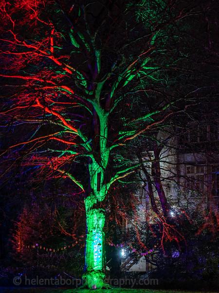 Illuminated Winter Wonderland by night-20.jpg