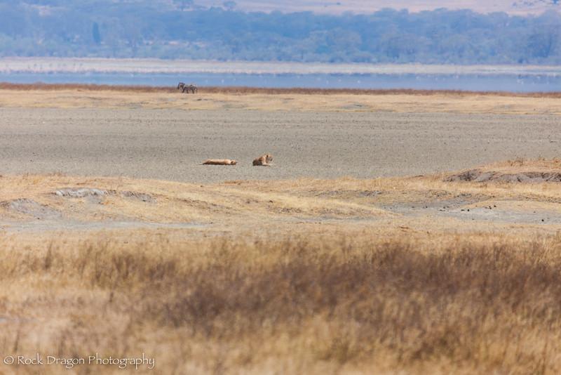 Ngorongoro-73.jpg