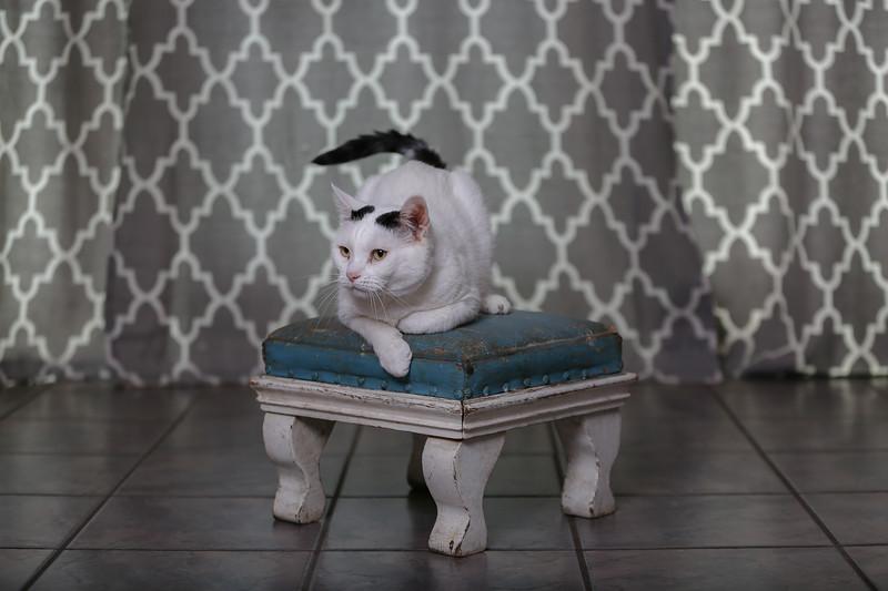 Polzin Cats-3.jpg