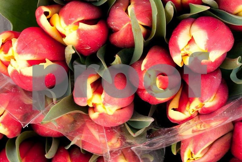 Tulips 2314.jpg