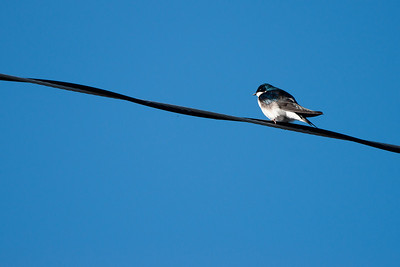 Birding 04-03-10
