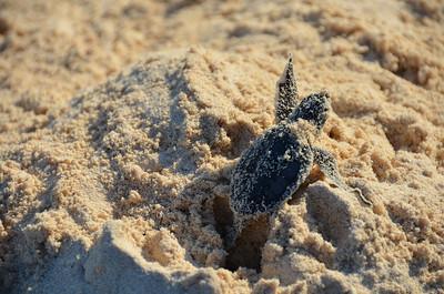 2013 Turtles Cozumel