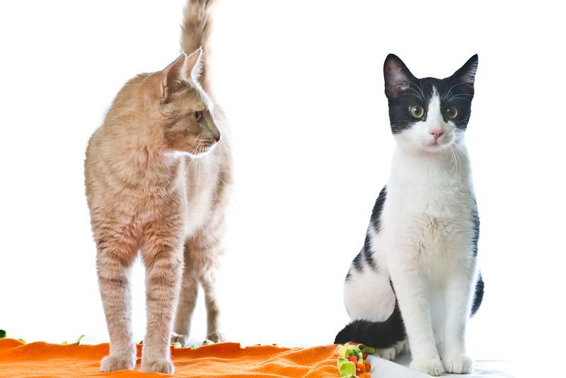 1202_Cats_268.jpg