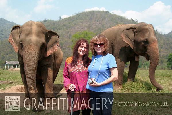 Elephant Nature Park 2/20/08