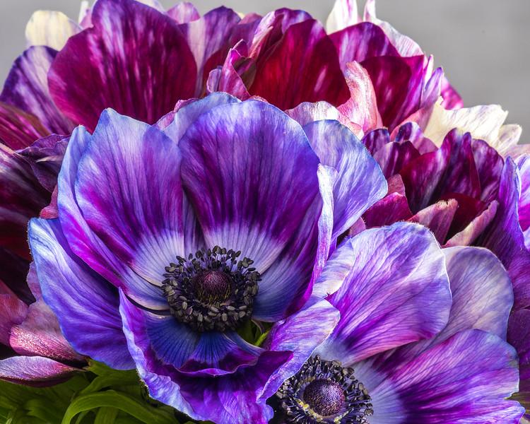 multicolor-anemone-02.jpg