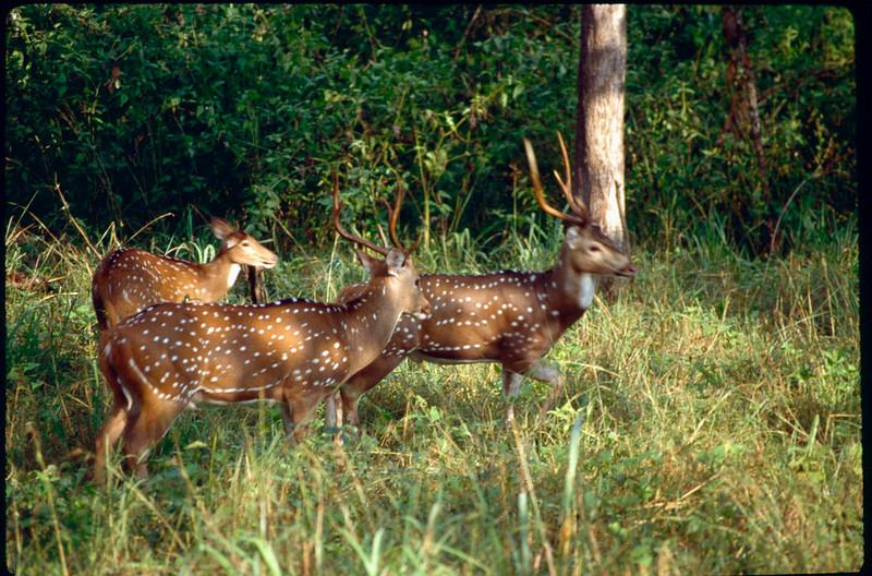 Nagarahole Game Reserve
