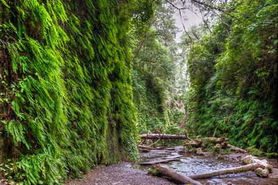 Fern Canyon & the Coast