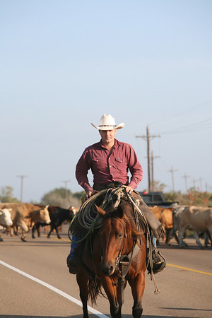 Matagorda Cattle Drive - Swimming Cattle Nov 14, 2007