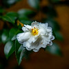 FlowerRedWingPark-004