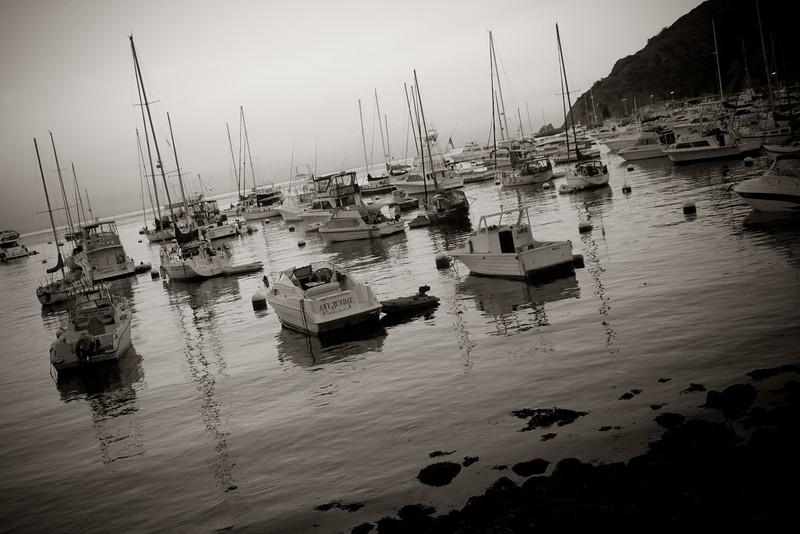 boats in the avalon harbor