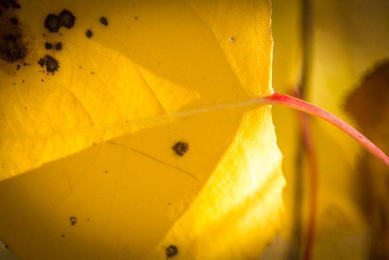 20151024-Fall Colors-29.jpg