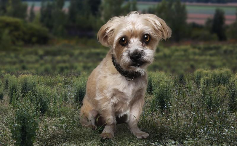 Roxboro-chien-4.jpg