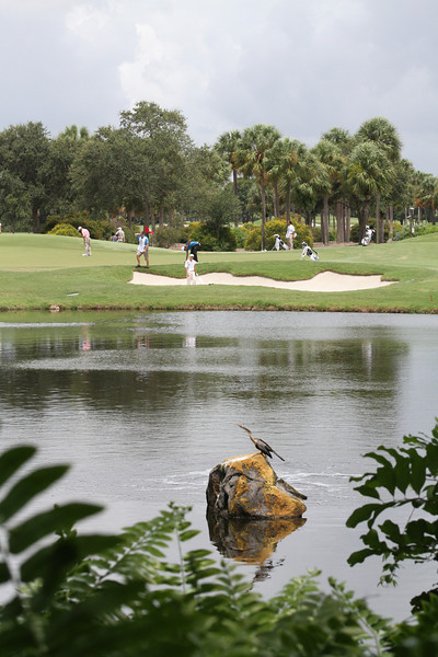 Just one of many captivating views at the Country Club of Florida.