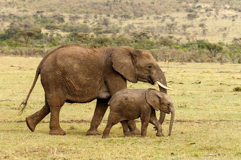 Kenya 2015-10255.jpg
