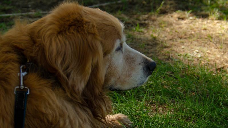 PuppyParty18-546.jpg