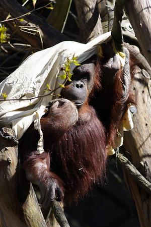 Woodland Park Zoo 4/8/11