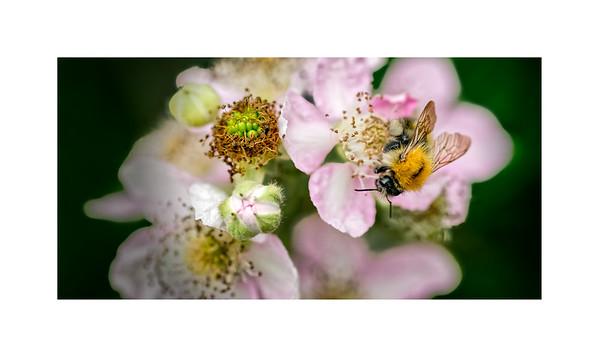 Wildlife:  Bees