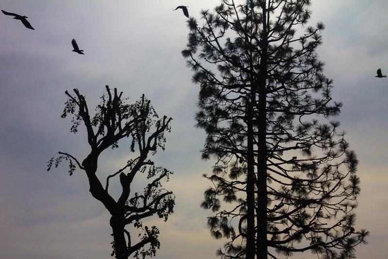 dec 4 - trimed trees.jpg