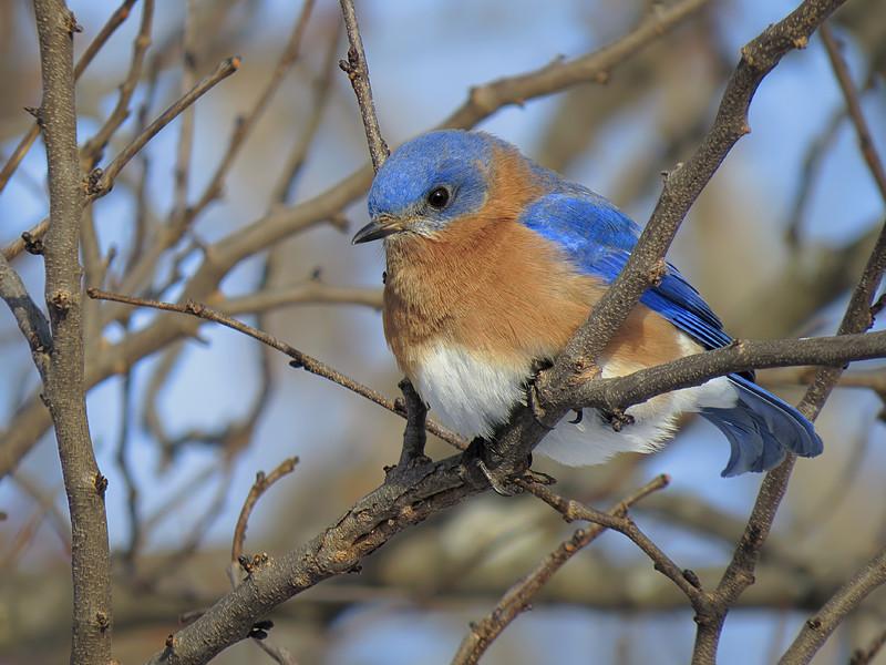 sx50_bluebird_bit_cr2_dpp_062.jpg