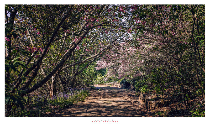 Mount Wilson Springtime