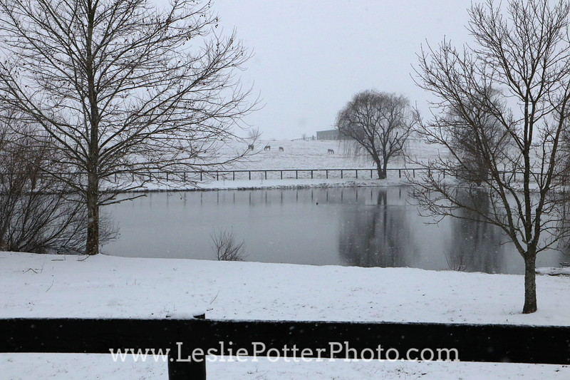 Horse Farm and Pond in the Snow