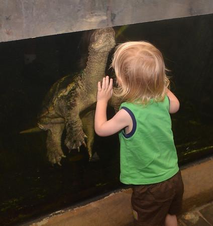 Aquarium Visit