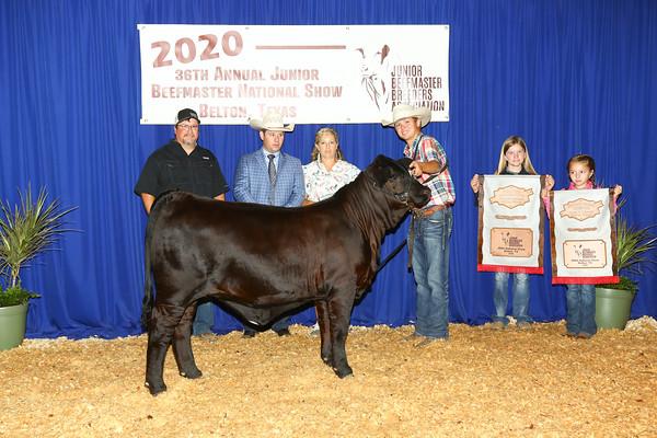 Bred & Owned Heifer Show