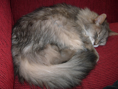 Cats 2009