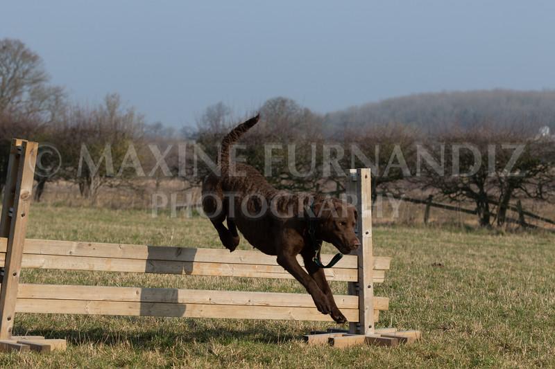 Dog Training Novice GD Feb2019-6014.jpg