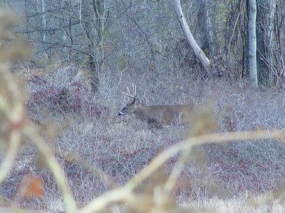 Wildlife and Foolishment