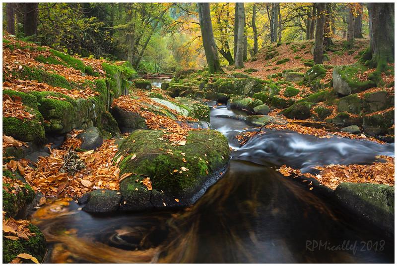 Woodland whirlpool.jpg