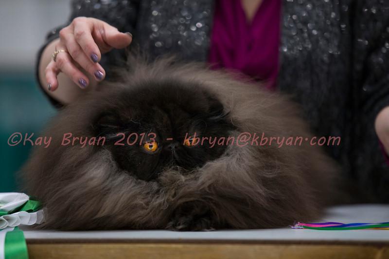 CatShow2014128.jpg