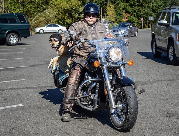 1009 tourist  Tallis (the canine in back) rode on the back of the bike all the way from Texas to Olympia, Washington. He and his driver were just beginning their journey home.