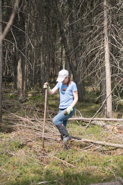 tree planting FOSZB Warren Nelson Bog Blue Spruce Road Sax-Zim Bog MN DSC07421.jpg