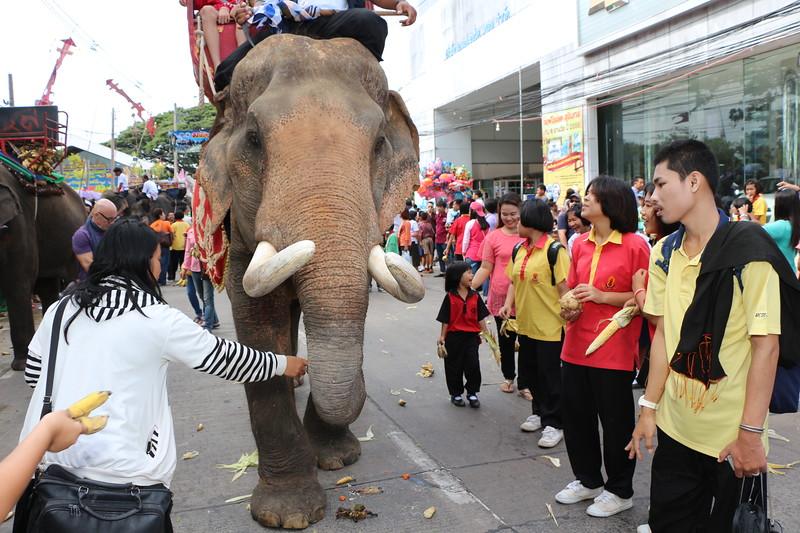 2014-11-14 Surin Elephant Welcome Feast 362.JPG
