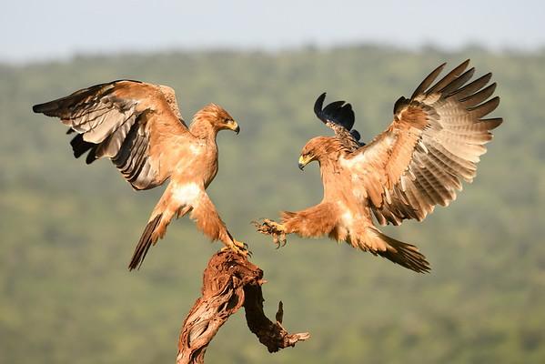 Scavenger's Hill Vulture Hide