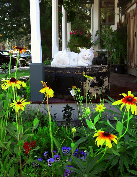 Happy Cat 3 Sisters Floral shop IMG_4105 copy.jpg