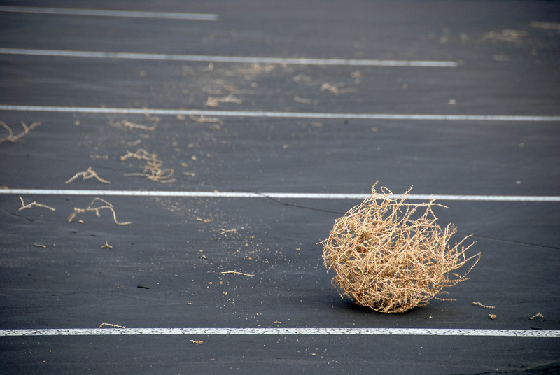 5/1/07 – This tumble weed was in our parking lot at work. Someone drove over it, dragging it across the parking lot. You can see the path it took before popping out from under the car. I shot several images today but this was the only one that I thought was interesting.