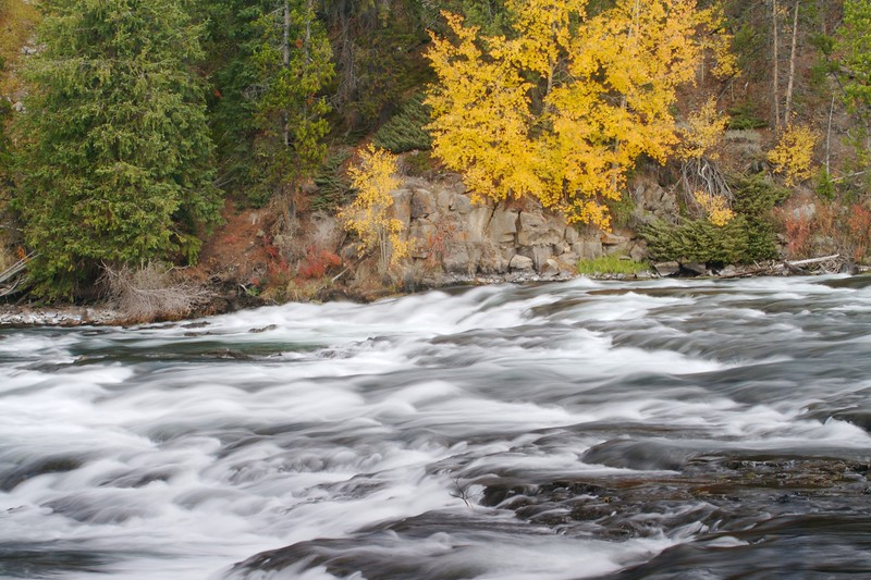 Yellowstone River and aspens [September; Yellowstone National Park, Wyoming]